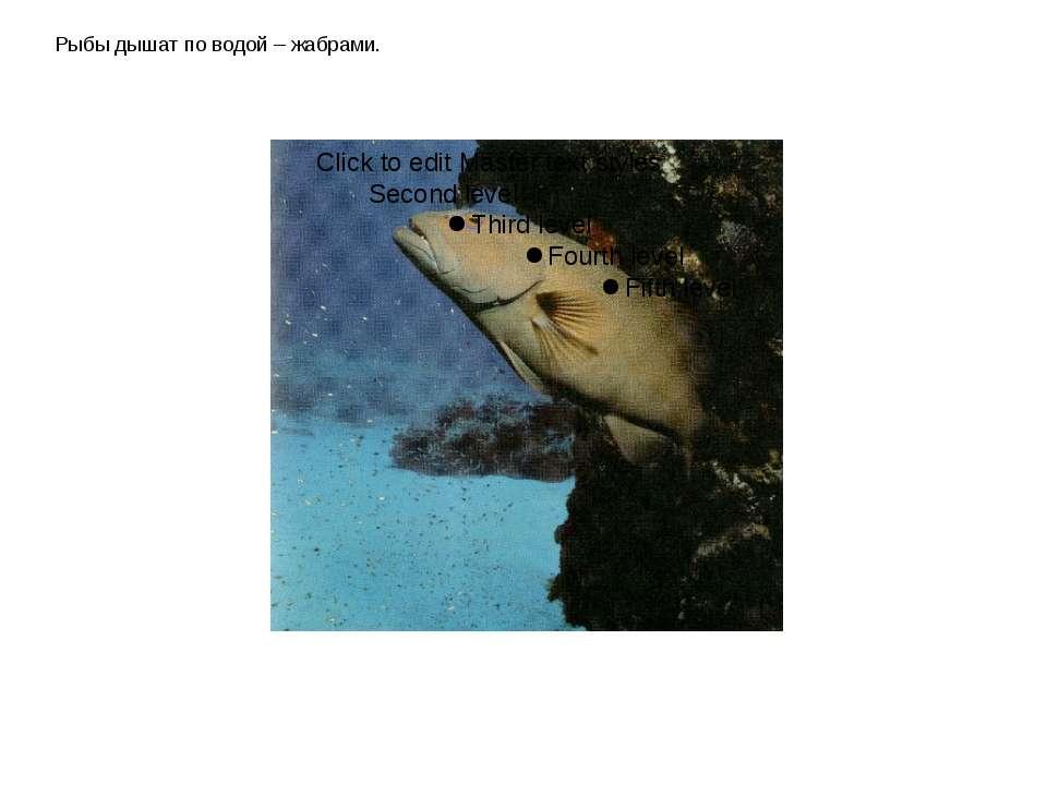 Рыбы дышат по водой – жабрами.