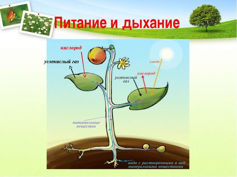 Питание и дыхание кислород углекислый газ