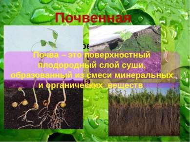 Почвенная Нет света Небольшие перепады температуры и влажности в течении суто...