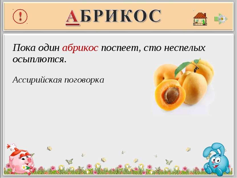 Пока один абрикос поспеет, сто неспелых осыплются. Ассирийская поговорка