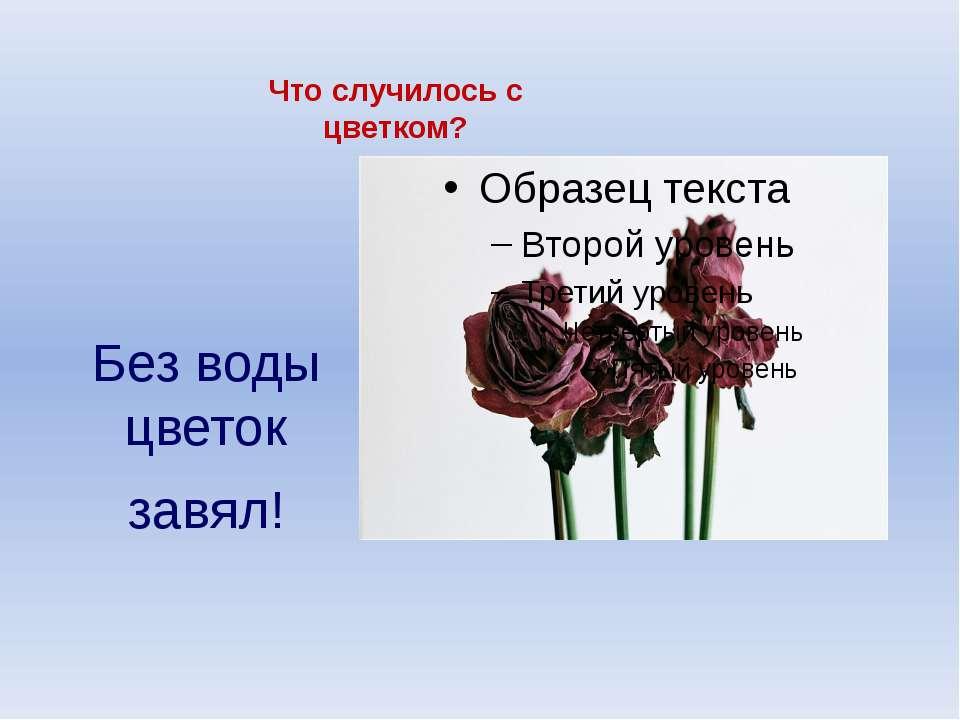 Что случилось с цветком? Без воды цветок завял!