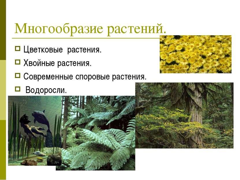 Многообразие растений. Цветковые растения. Хвойные растения. Современные спор...