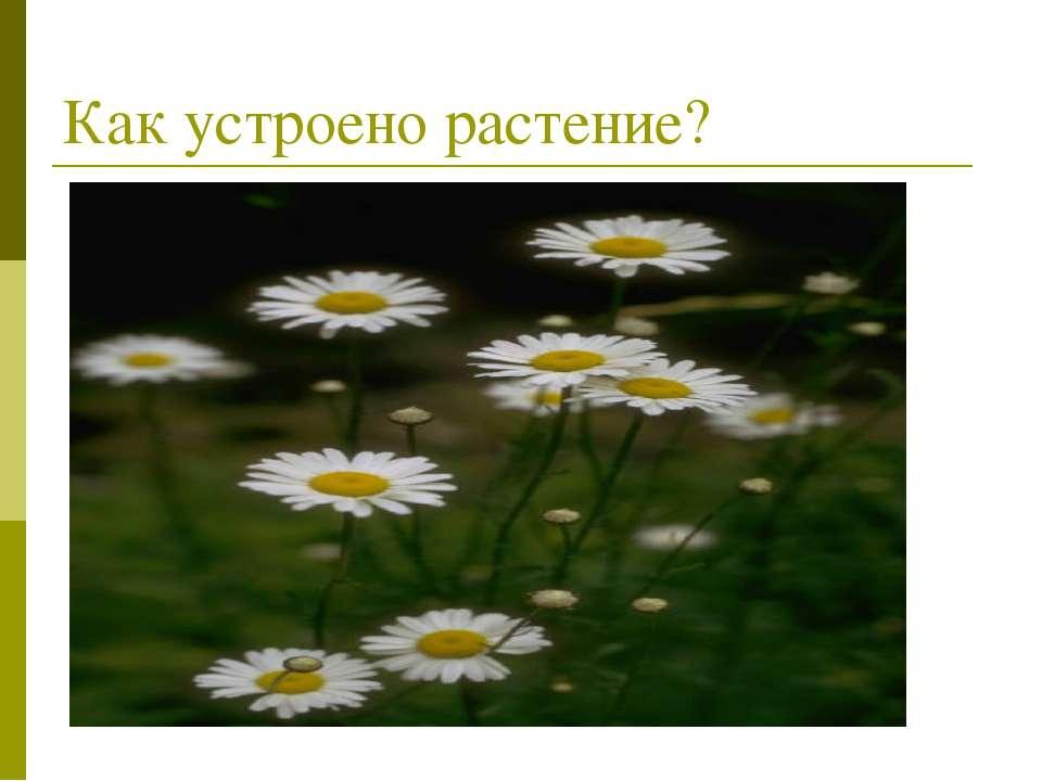 Как устроено растение?