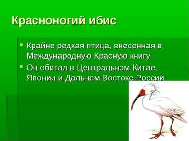 Красноногий ибис Крайне редкая птица, внесенная в Международную Красную книгу...