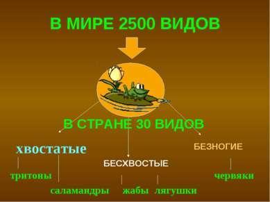 В МИРЕ 2500 ВИДОВ хвостатые БЕСХВОСТЫЕ БЕЗНОГИЕ тритоны саламандры жабы лягуш...
