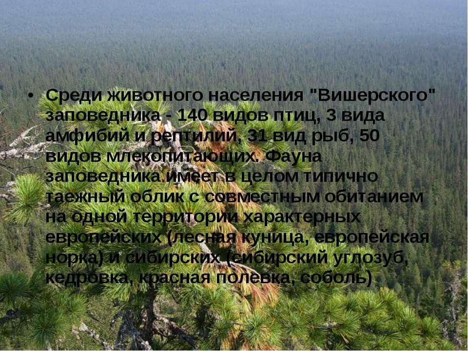 "Среди животного населения ""Вишерского"" заповедника - 140 видов птиц, 3 вида а..."