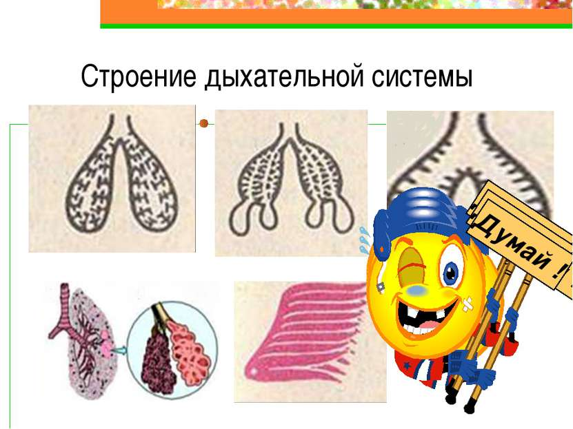 Строение дыхательной системы