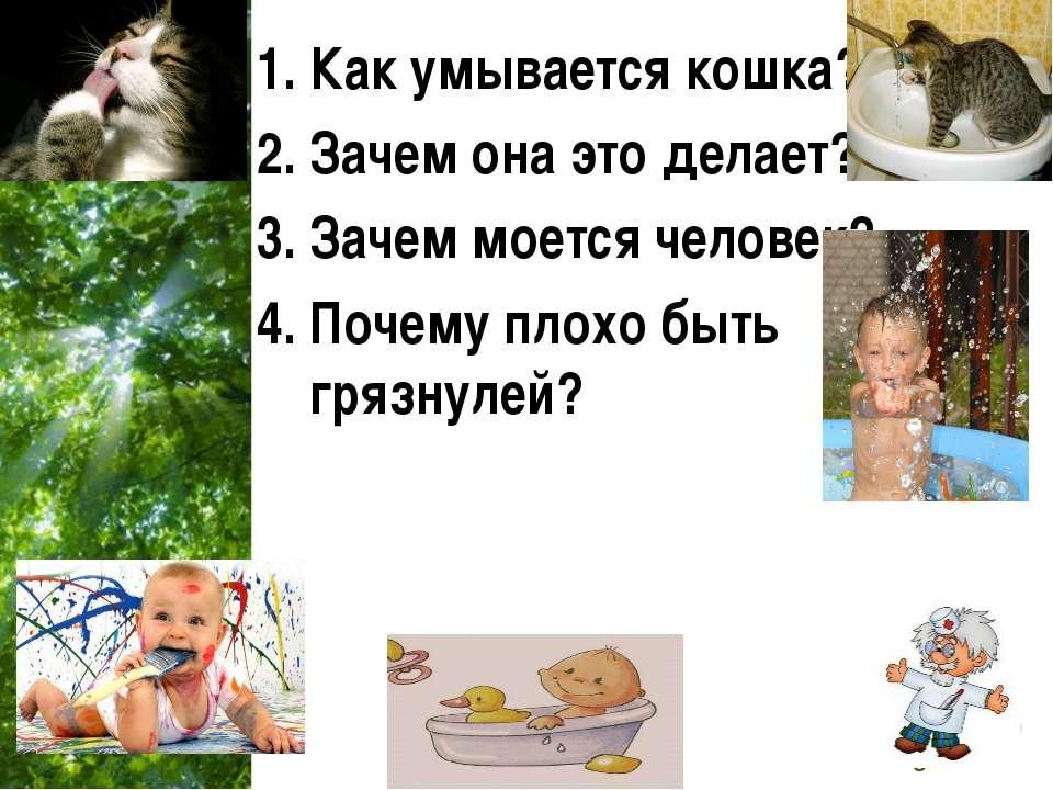 Как умывается кошка? Зачем она это делает? Зачем моется человек? Почему плохо...