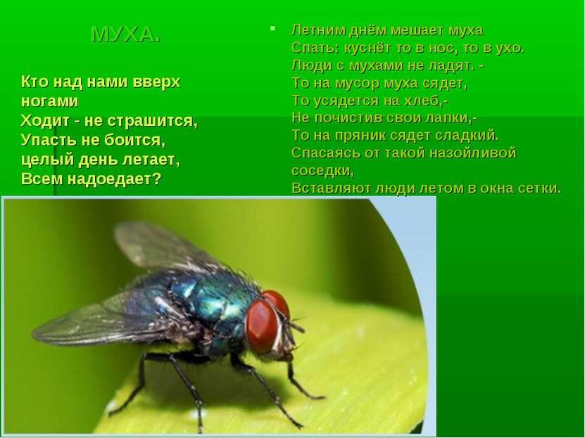 МУХА. Летним днём мешает муха Спать: куснёт то в нос, то в ухо. Люди с мухами...