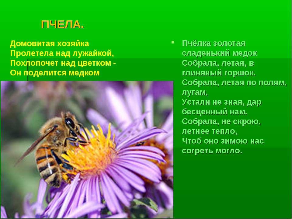 ПЧЕЛА. Пчёлка золотая сладенький медок Собрала, летая, в глиняный горшок. С...