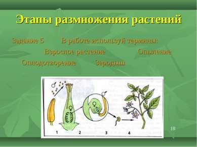 Этапы размножения растений Задание 5 В работе используй термины: Взрослое рас...