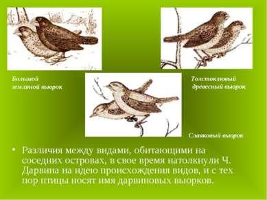 Различия между видами, обитающими на соседних островах, в свое время натолкну...