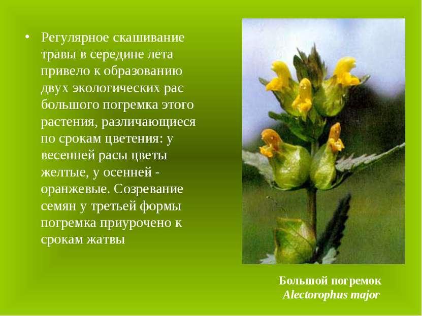 Регулярное скашивание травы в середине лета привело к образованию двух эколог...