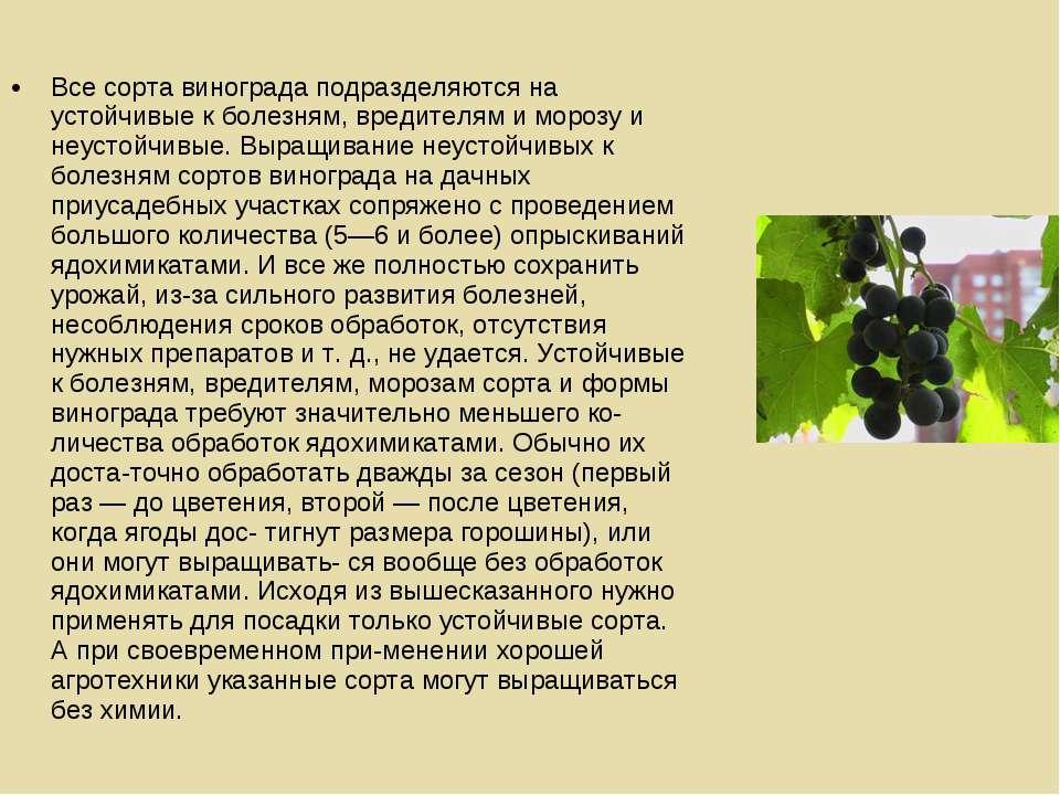 Все сорта винограда подразделяются на устойчивые к болезням, вредителям и мор...