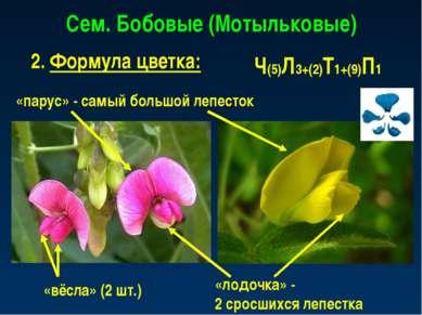 Сем. Бобовые (Мотыльковые) 2. Формула цветка: Ч(5)Л3+(2)Т1+(9)П1 «парус» - са...