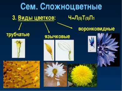 Сем. Сложноцветные 3. Виды цветков: трубчатые язычковые воронковидные Ч∞Л(5)Т...