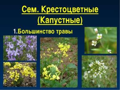 Сем. Крестоцветные (Капустные) Большинство травы