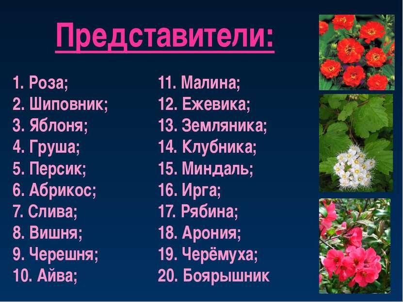 Представители: 1. Роза; 2. Шиповник; 3. Яблоня; 4. Груша; 5. Персик; 6. Абрик...