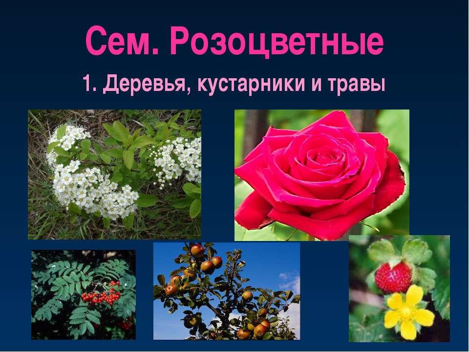 Сем. Розоцветные 1. Деревья, кустарники и травы