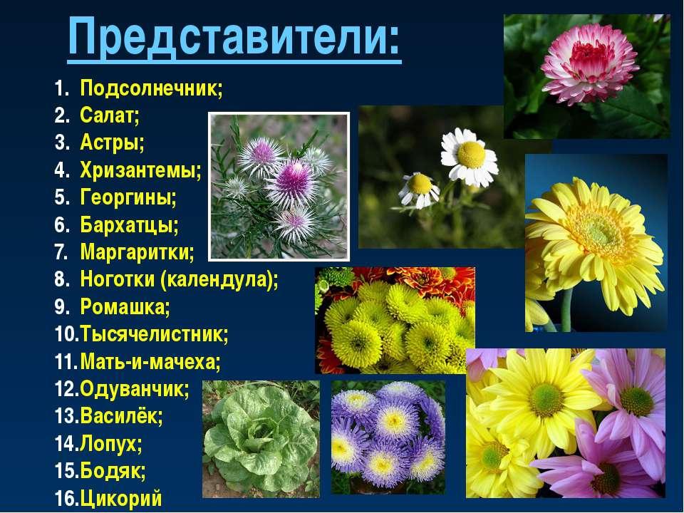 Представители: Подсолнечник; Салат; Астры; Хризантемы; Георгины; Бархатцы; Ма...