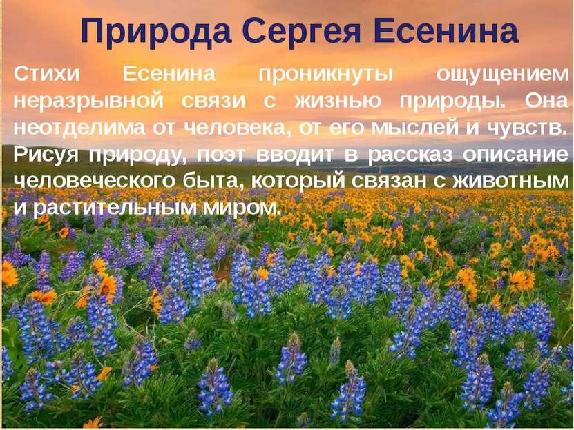 Природа Сергея Есенина Стихи Есенина проникнуты ощущением неразрывной связи с...