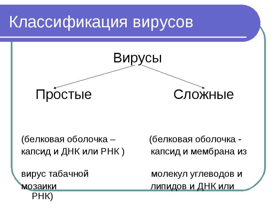 Классификация вирусов Вирусы Простые Сложные (белковая оболочка – (белковая о...