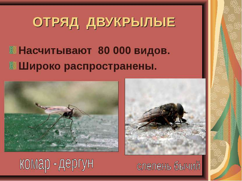 ОТРЯД ДВУКРЫЛЫЕ Насчитывают 80 000 видов. Широко распространены.
