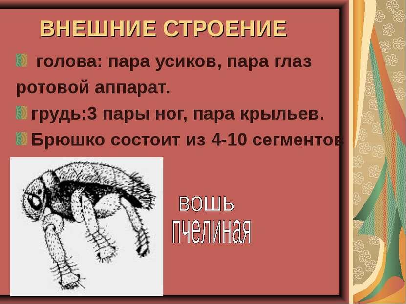 ВНЕШНИЕ СТРОЕНИЕ голова: пара усиков, пара глаз ротовой аппарат. грудь:3 пары...