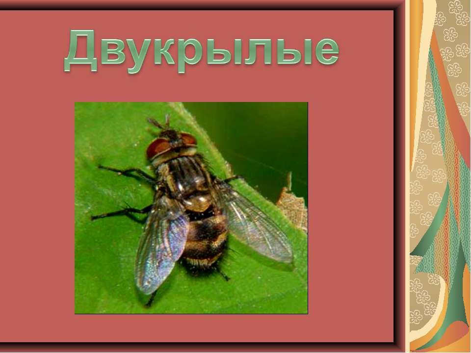 golie-russkie-devushki-v-yutube