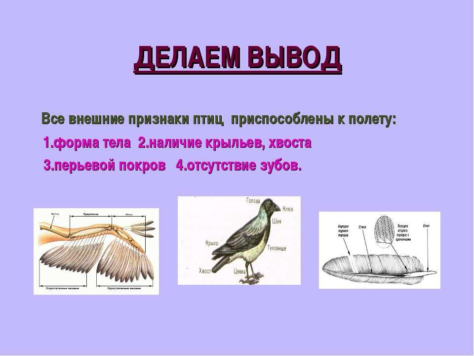 ДЕЛАЕМ ВЫВОД Все внешние признаки птиц приспособлены к полету: 1.форма тела 2...