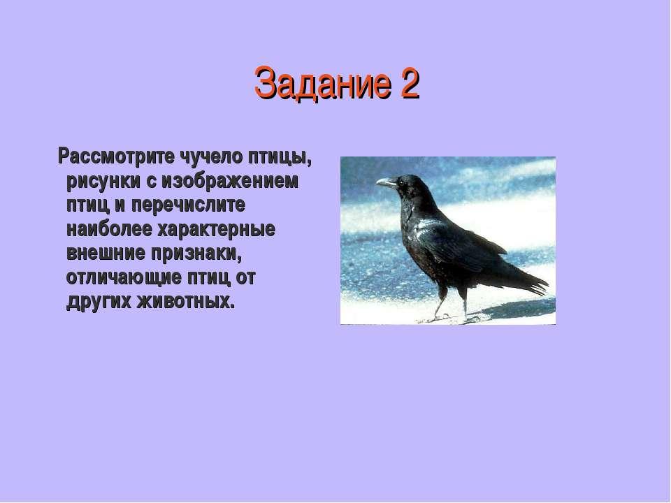 Задание 2 Рассмотрите чучело птицы, рисунки с изображением птиц и перечислите...