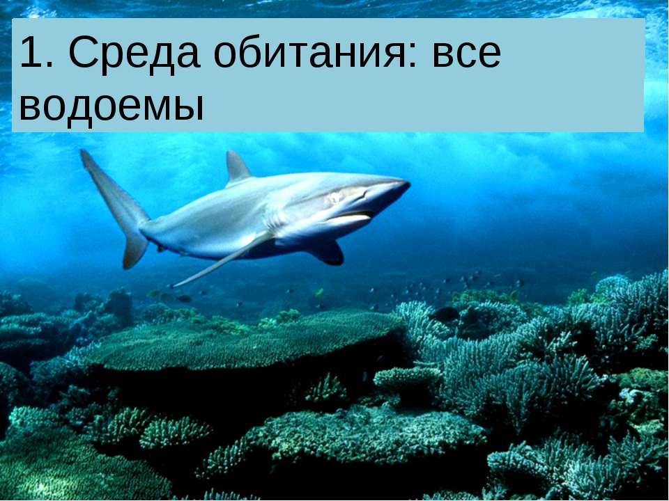 1. Среда обитания: 1. Среда обитания: все водоемы