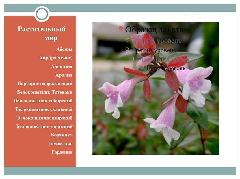 Растительный мир Абелия Аир (растение) Алоказия Аралия Барбарис подражающий Б...