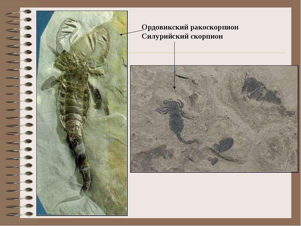Ордовикский ракоскорпион Силурийский скорпион