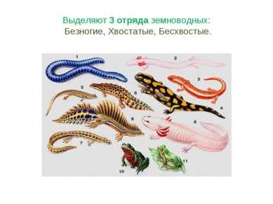 Выделяют 3 отряда земноводных: Безногие, Хвостатые, Бесхвостые.