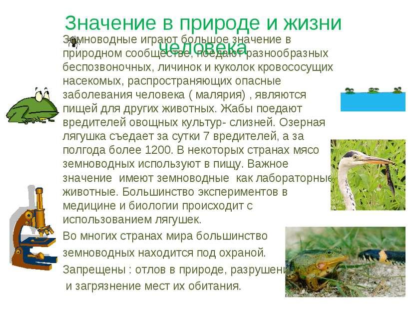 Значение в природе и жизни человека Земноводные играют большое значение в при...