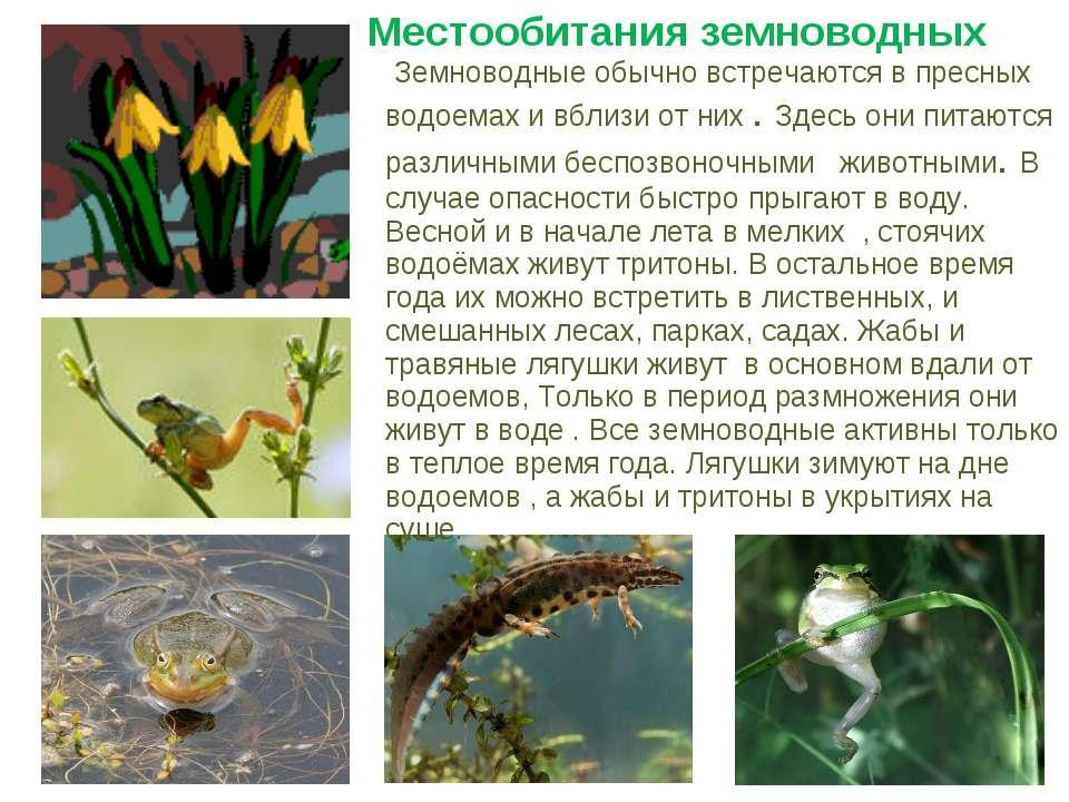Местообитания земноводных Земноводные обычно встречаются в пресных водоемах и...