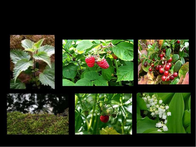 Рассмотрите внимательно растения, которые растут в лесу, кроме деревьев. На к...