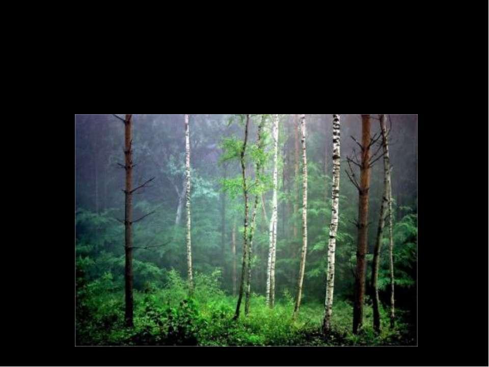 Как называются леса в которых растут хвойные и лиственные деревья? Смешанные ...