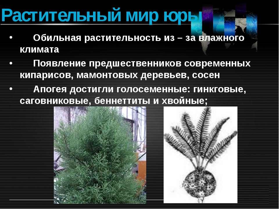 Растительный мир юры Обильная растительность из – за влажного климата Появлен...