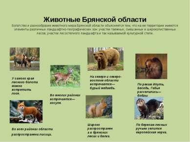 Животные Брянской области Богатство и разнообразие животного мира Брянской об...