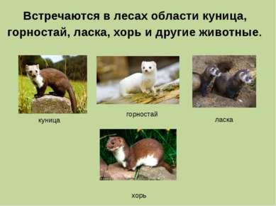 Встречаются в лесах области куница, горностай, ласка, хорь и другие животные....