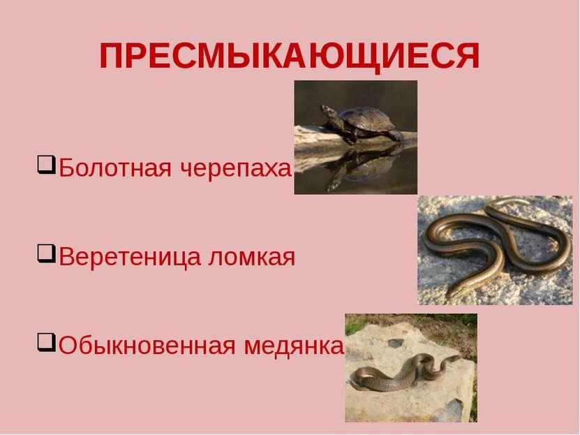 ПРЕСМЫКАЮЩИЕСЯ Болотная черепаха Веретеница ломкая Обыкновенная медянка