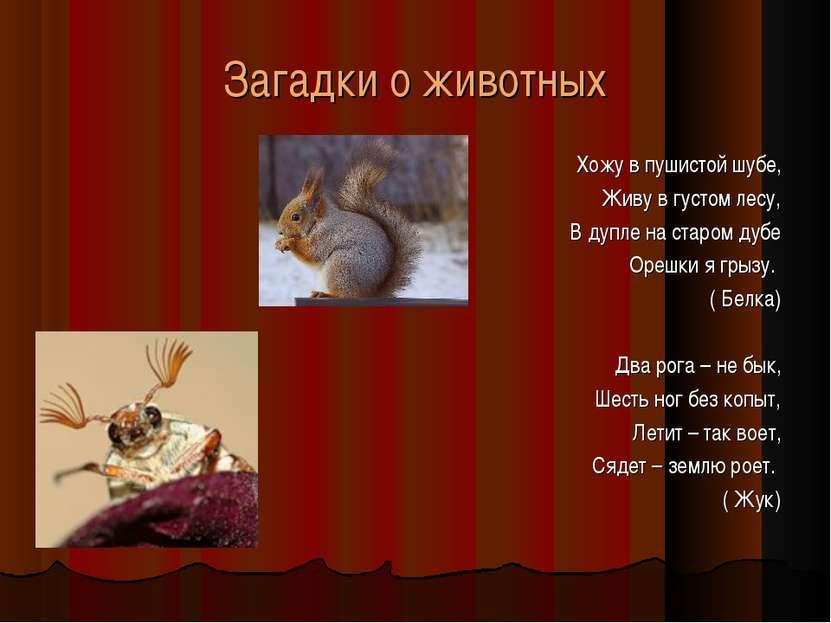 Загадки о животных Хожу в пушистой шубе, Живу в густом лесу, В дупле на старо...