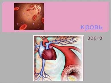 кровь аорта