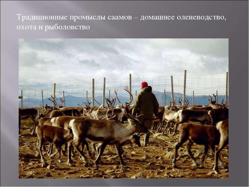Традиционные промыслы саамов – домашнее оленеводство, охота и рыболовство
