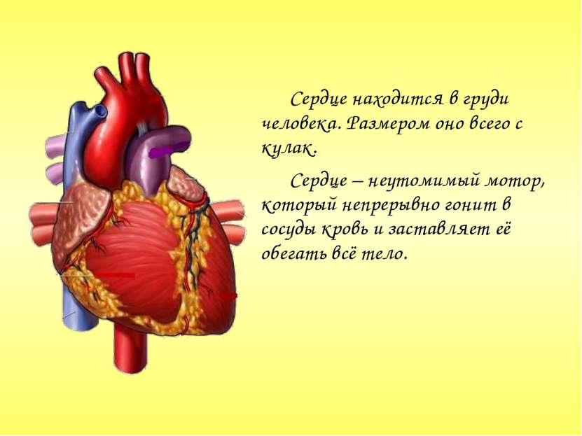 Сердце находится в груди человека. Размером оно всего с кулак. Сердце – неуто...