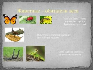 Животные – обитатели леса Бабочки, Жуки, Пчелы Они опыляют цветки Травянистых...