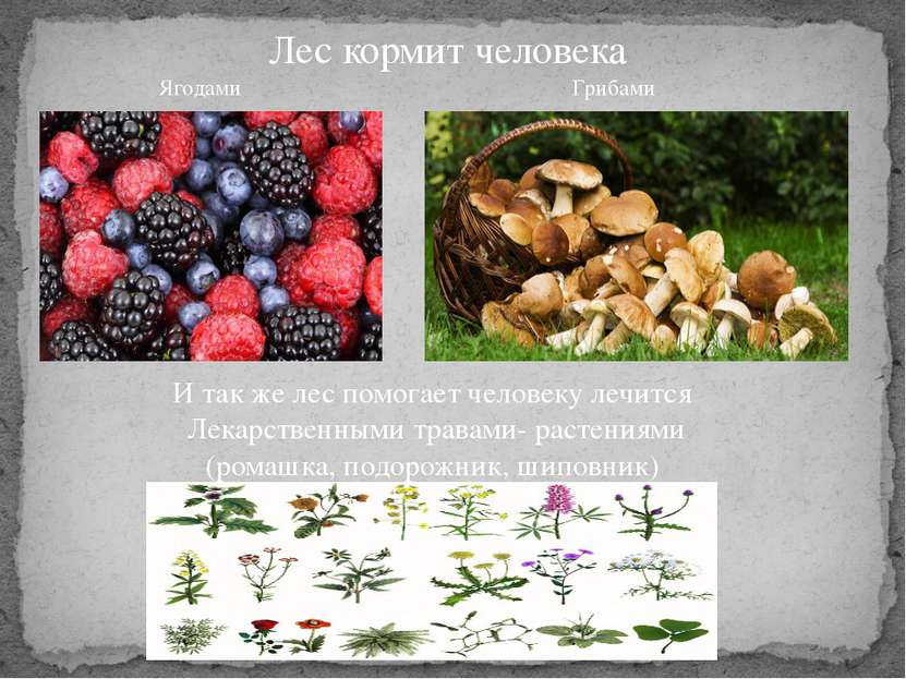 Лес кормит человека Ягодами Грибами И так же лес помогает человеку лечится Ле...