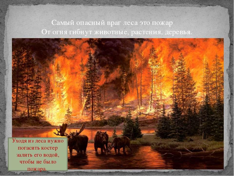 Самый опасный враг леса это пожар От огня гибнут животные, растения, деревья....